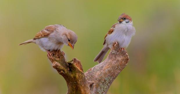Kuşların mutlulukla bir ilgisi var
