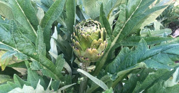 Mevsimsel Beslen Takvimi | Nisan