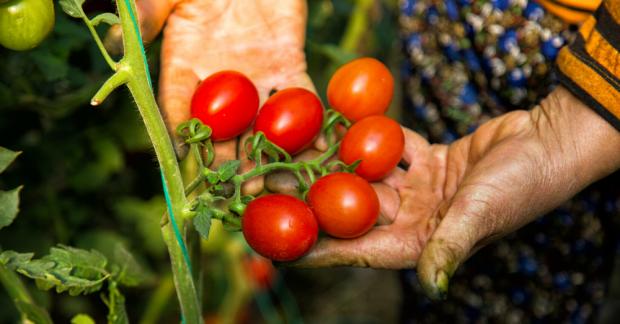 Onarıcı tarım toprak sağlığını korur