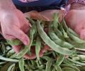 Mevsimsel Beslen Takvimi | Mayıs