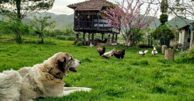 WWOOF Türkiye/TaTuTa Ekolojik Çiftlikleri: Düzpelit Organik Yaşam Alanı