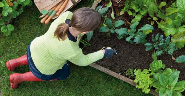Bahçeciliğe Giriş ve Ekolojik Yaşamın Temelleri – 12-14 Ekim 2021